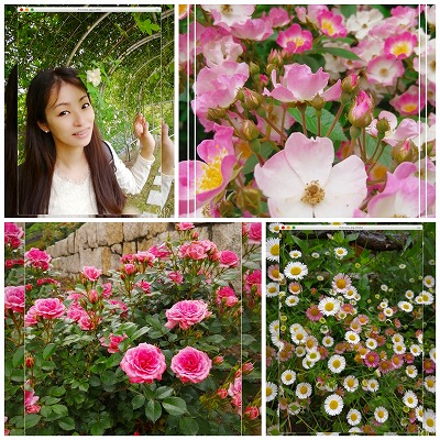 バラ 可児フラワーパーク 花フェスタ記念公園