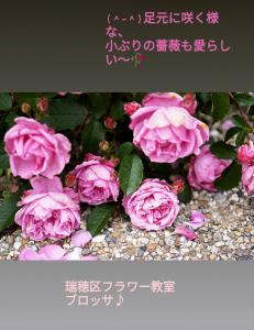 初夏のバラ 生花